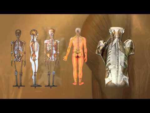ภาพถ่ายของหนอนที่อาศัยอยู่ในร่างกายมนุษย์