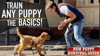 How To Prepare ANY Pet To Stroll on Leash PERFECTLY!