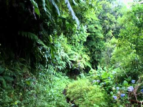 Laurissilva da Madeira