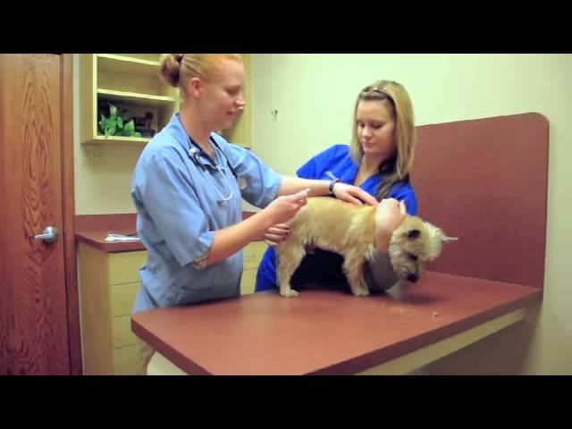 Watch a dog get microchipped