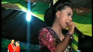 preview picture of video 'Aisiteru campur sari tokek sekar mayang'