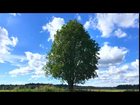 Tree on the field. Timelapse. Дерево на поле. Таймлапс.
