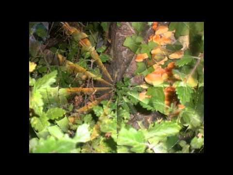 Segni di esistenza di un fungo di unghie
