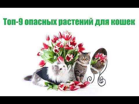 Топ-9 Опасных Комнатных Растений Для Кошек & Какие Растения Опасные Для Кошек. Ветклиника Био-Вет