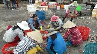 Tin Tức 24h Mới Nhất Hôm Nay: Mùa bưởi ngọt đón Tết ở Sóc Trăng