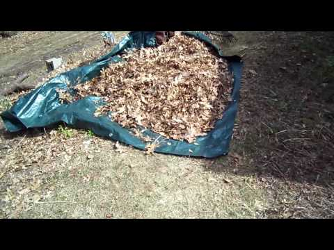 Rake Leaves Onto A Tarp For Speedy Cleanup