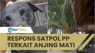 Tanggapi Anjing Mati saat Dievakuasi, Satpol PP: Tak Ada Penyiksaan, Malah Diberi Makan dan Minum
