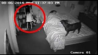 Самые страшные видео в мире с животными, которые увидели призраков. 10  страшных видео, подборка для вас. 10 видео которые вас напугают. Ходят  много легенд и слухов, про животных которые видят что то, 10 пугающих  видео,животные