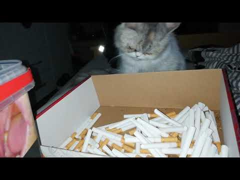 Biene die rauchende Katze 😜😂😂 diebische Elster .
