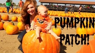 PUMPKIN PATCH 2014!