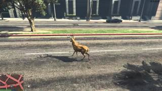 Mod hoá thân thành các con vật trong GTA 5