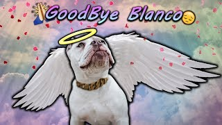 GoodBye Blanco