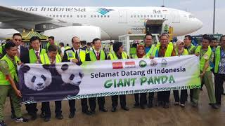 Garuda Indonesia - #WelcomingPanda Cai Tao & Hu Chun in Indonesia