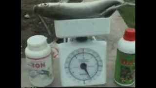 preview picture of video 'TIPS TAMBAK BANDENG 2 - PATI JAWA TENGAH'