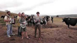 """The Ditty Bops @ Straus Family Creamery: """"Cows Come Home"""""""