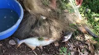 Unbelievable Fisherman vs. World Record Giant Piranha Fish