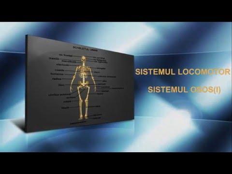 Condroitină și lichid glucozamină