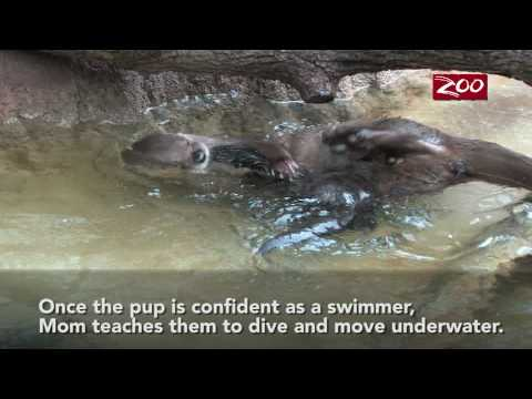 Puppies and Flowers : Otter swimming lessons