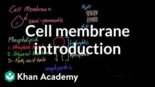Cell membrane introduction | Cells | MCAT | Khan Academy