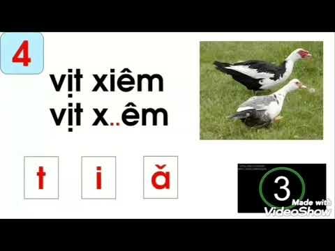 Trò chơi với chữ cái i-t-c