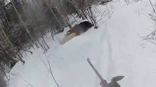 Экомир   охота на кабана