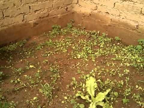 Verduras Producidas en la Carpa Solar de la Escuela Para Ayudar con la Alimentacion de los Estudiant