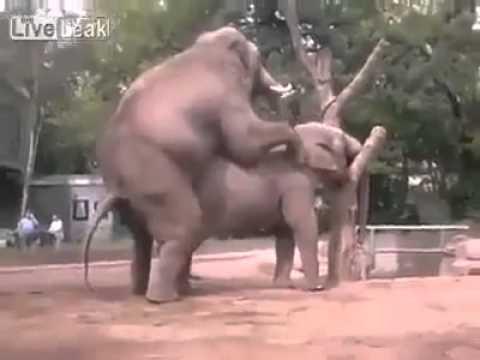 難得一見的大象交配 想不到最后還...