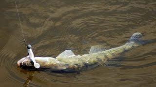 Рыбалка в дельте дона базы