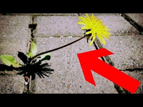 Gartentipp: Unkraut & Moos leicht aus Fugen entfernen ohne Bücken – Pflasterfugen reinigen Lifehack