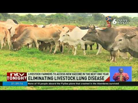 Livestock farmers to access vaccine against lung disease in the next one year
