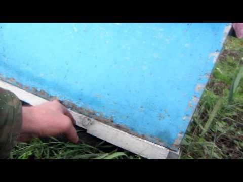 Сравнение краски ульев из ДВП . Beekeeping.