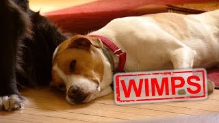 How to Test if Your Dog Will Wimp Out During a Burglary