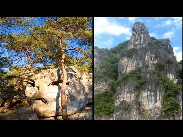 Our Petrified Giant Past - Petrified Titans, Giants & Huge Ancient Trees - Short Version
