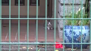 母性の厚い母猫と母性の薄い母猫を眺めてみた The Mother Cat Had No Attention For Her Kitten