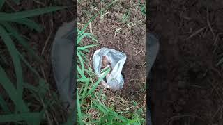 How to Bury a dead Dog or Puppy
