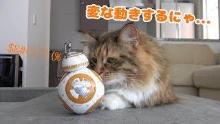 スターウォーズ BB-8と猫の会話が可愛いかった!