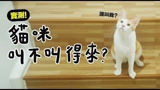 【黃阿瑪的後宮生活】貓咪叫不叫得來?
