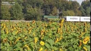 Tovorni vlak in polje sončnic