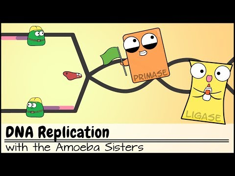 DNA Replication (Updated)