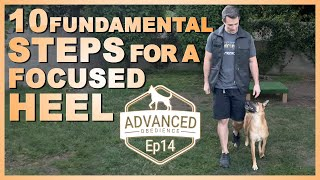 10 Fundamental Steps for a Focused Heel. Advanced Obedience Ep14