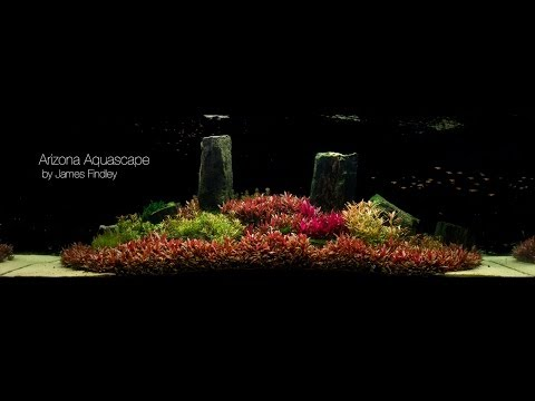 Arizona Aquascape by James Findley (1600 Litre) The Making Of
