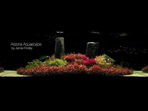 ... Jungle Aquascape by James Findley Free Gratis at Vid.blogspot.website