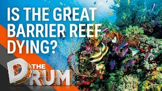 Is the Great Barrier Reef Dying? | The Drum