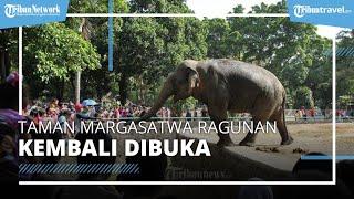 Taman Margasatwa Ragunan Kembali Dibuka, Apa Saja Syaratnya?