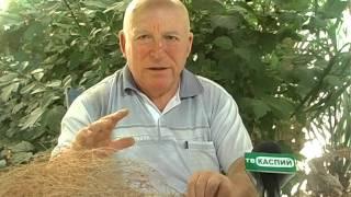 полезные советы от кандидата биологических наук Рустамова А.Д.