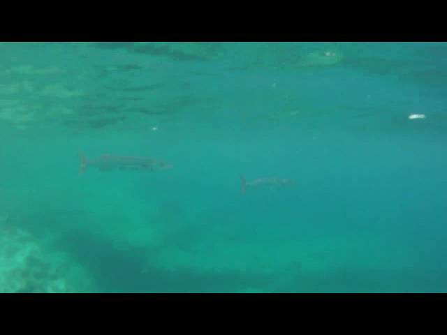 Snorkeling at Deadmans Reef, Grand Bahama