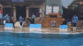 Captain Jack's Sea Lion Show