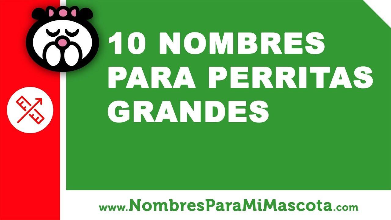 10 nombres para perritas grandes - los mejores nombres de mascota - www.nombresparamimascota.com