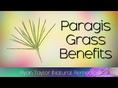 , title : 'Paragis Grass: Benefits & Uses (Goose Grass)