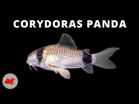 Les parasites pijma polyn
